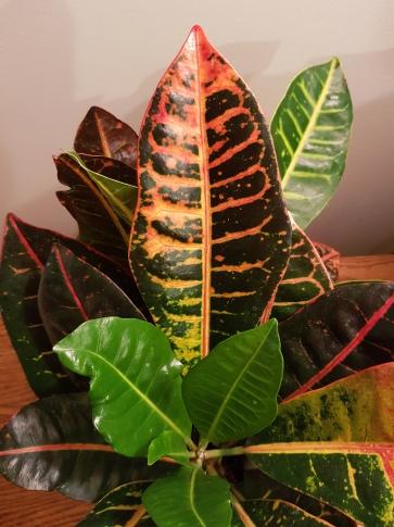 Beautiful leaf colours!